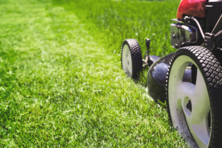 turf care tips