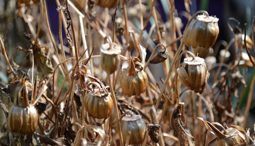 10 common gardening mistakes