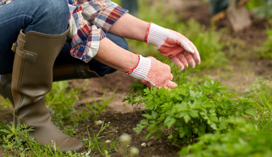how gardening can help reduce stress
