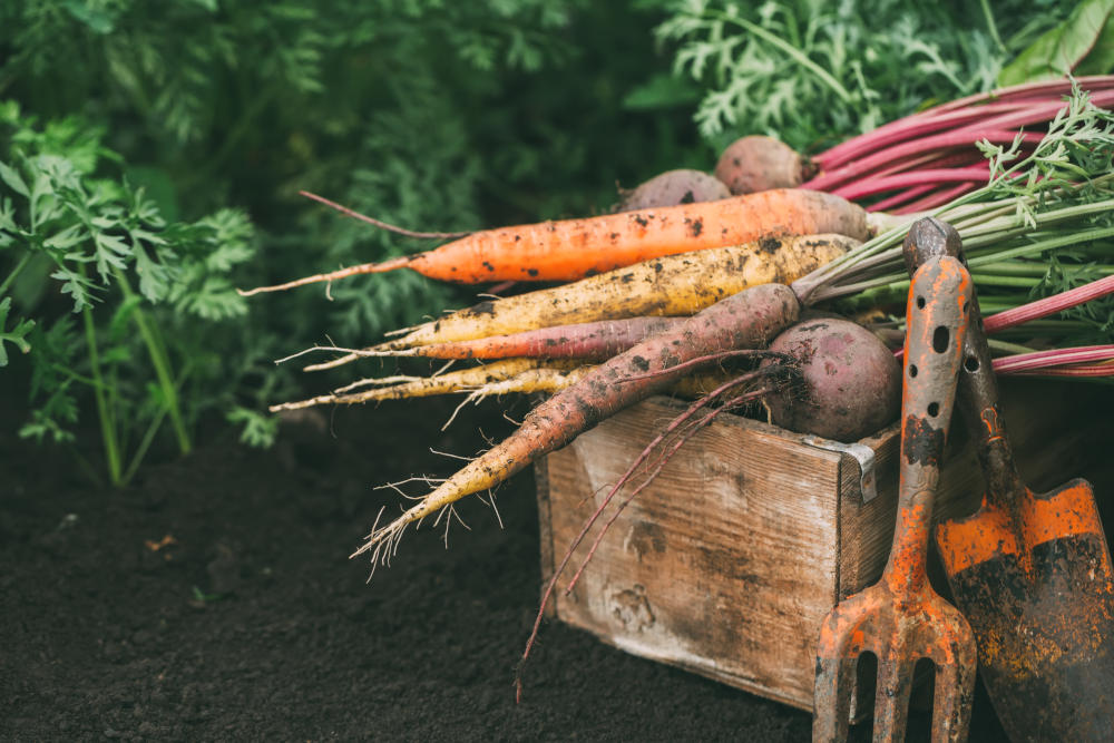 when to start a vegetable garden