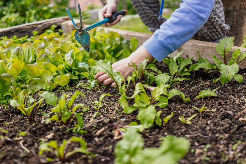 10 Reasons To Choose A Raised Garden Bed