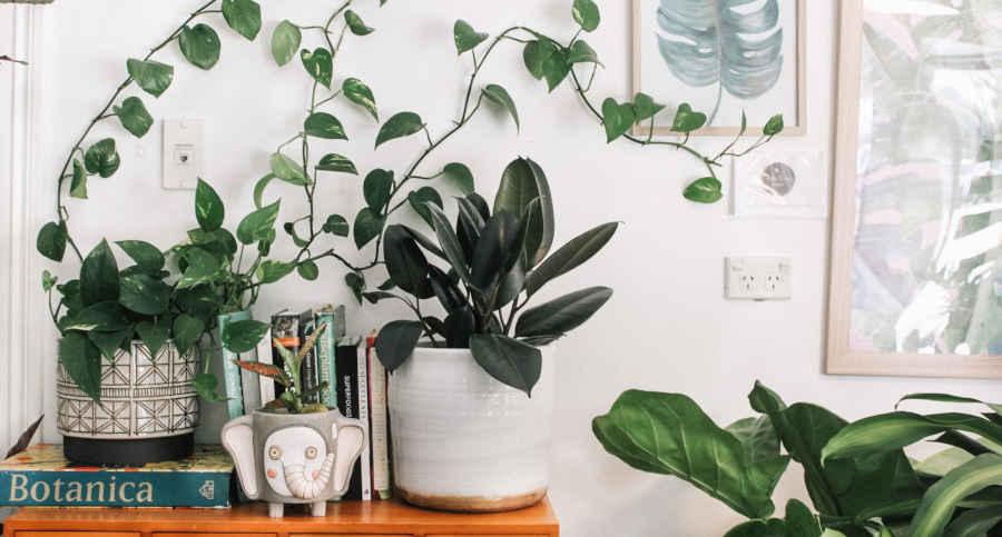Indoor Plant Nursery Brisbane Southside